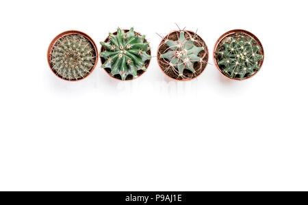 Cuatro macetas con cactus pararse en una fila sobre un fondo de madera blanca
