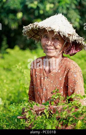 Mujer en un sombrero cónico chiles de cosecha en un campo en la zona rural de Kampot, Camboya, Indochina, en el sudeste de Asia, Asia