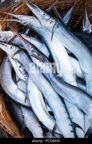Needlefish (Belonidae sp.) en una cesta en la mañana mercado de pescado, en las orillas del río Chhu Preaek Tuek en Kampot town, Camboya
