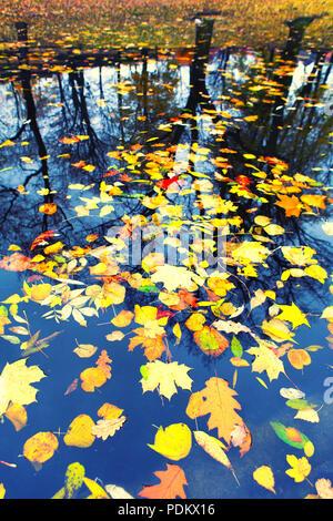 Hojas de otoño flotando en el agua en la reflexión, las siluetas de los árboles en la orilla