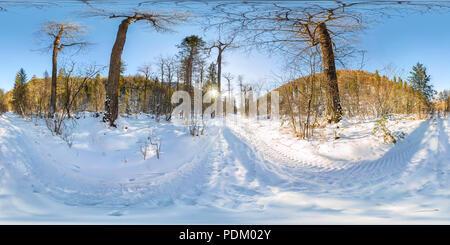 Camino en el bosque de invierno al amanecer. 360 VR 180 Panorama esférico.