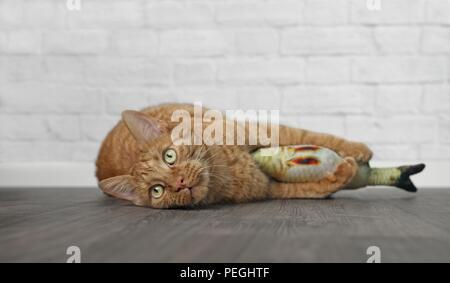 Jengibre lindo gato tumbado y abrazando un pez de juguete.