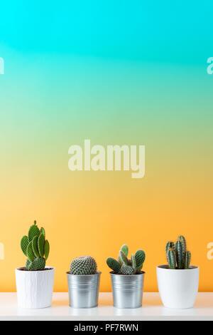 Colección de diversas plantas de cactus y suculentas en diferentes ollas. Cactus en maceta de plantas de casa en blanco contra el estante de pared multicolor. Foto de stock