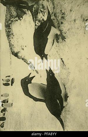 . Me Deuxièexpédition Antarctique Française (1908-1910). Historia Natural -- La Antártida; expediciones científicas -- La Antártida; la Antártida. Oh 'OC. Por favor tenga en cuenta que estas imágenes son extraídas de la página escaneada imágenes que podrían haber sido mejoradas digitalmente para mejorar la legibilidad, la coloración y el aspecto de estas ilustraciones pueden no parecerse perfectamente a la obra original. Francia. Ministère de l'éeducación nationale; Expédition Antarctique Française (2ª : 1908-1910); Charcot, Jean, 1867-1936; Joubin, L. (Louis), 1861-1935. Paris : Masson