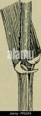. Das Leben der Pflanze. Las plantas; plantas; plantas; Phytogeography. . Por favor tenga en cuenta que estas imágenes son extraídas de la página escaneada imágenes que podrían haber sido mejoradas digitalmente para mejorar la legibilidad, la coloración y el aspecto de estas ilustraciones pueden no parecerse perfectamente a la obra original. Francé, R. H. (Raoul Heinrich), 1874-1943; Gothan, Walther Ulrich Eduard Friedrich, 1879-1954; Lange, Willy, 1864-. Stuttgart, Kosmos, Gesellschaft der Naturfreunde