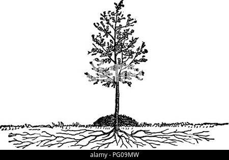 . La fruta americana culturist, que contiene instrucciones para la propagación y la cultura de todos los frutos adaptados a los Estados Unidos. Fruit-cultura. 82 EL CULTIVO DE LA TIERRA. Imposibilidad de mellowing del suelo por los cultivos sucesivos. Por esta razón, una baja cosecha de guisantes ha encontrado mucho peor que un crecimiento excesivo de Indio Maíz. La renovación de los viejos árboles.-Cuando los árboles viejos se convierten en endebles, allí. Fig. h8.-Falla estercolando. es la mejor forma de despertar en ellos el vigor que por estercolando. En lugar de adoptar la práctica más común de cavar una zanja circular alrededor de ellos y llenar este con estiércol, el