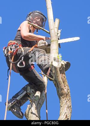 Arborist femenina trabaja en la parte superior del árbol.