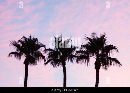 Palm Tree silueta durante el colorido atardecer Pastel Foto de stock