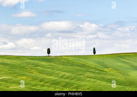 Ciprés solitario en la colina en el campo Foto de stock