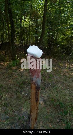 Una piedra de sal, lickstone de animales salvajes, como ciervos y venados, colocado en el tronco de un árbol en el bosque