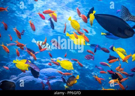 Arrecife tropical con un arco iris de variedad de peces de colores en el Acuario de Georgia, en Atlanta, Georgia. (Ee.Uu.) Foto de stock
