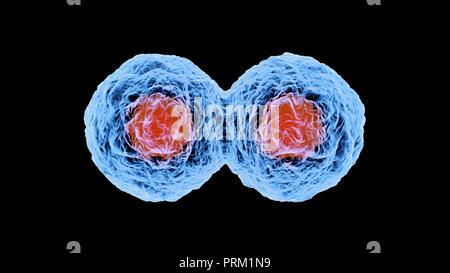 Ilustración 3D prestados de la mitosis y la replicación de una célula biológica genérica.