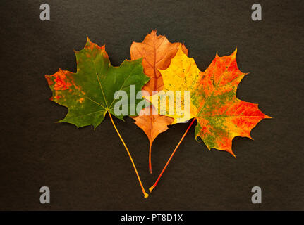 Hojas de otoño colorido sobre fondo negro Foto de stock