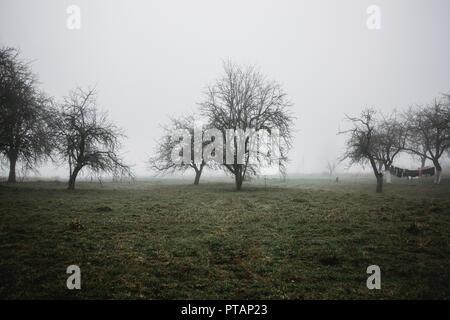 Paisaje de niebla en la aldea. Concepción mística de la naturaleza. Fondo de horror. Concepto de Halloween. Árboles en una fila en el horizonte.