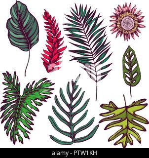 Colección de vectores dibujados a mano las hojas tropicales