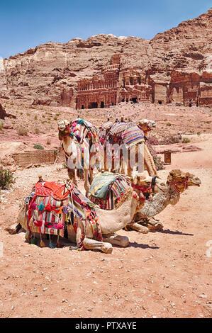 Un pequeño grupo de camellos espera para un paseo en el camino principal en el pintoresco destino de Petra en Jordania.
