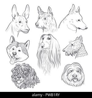 Cabeza de perro purebred sketch. Raras razas caninas. Perro dibujados a mano vectores colección aislado sobre fondo blanco.