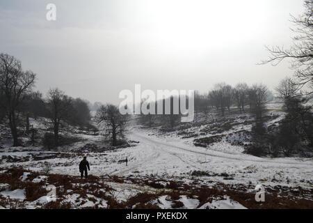 National Trust Knole Park en Sevenoaks, Kent, Inglaterra en una nevada, Misty día en marzo. Un miedo silueta de un hombre en la mitad de la distancia da una siniestra sentir