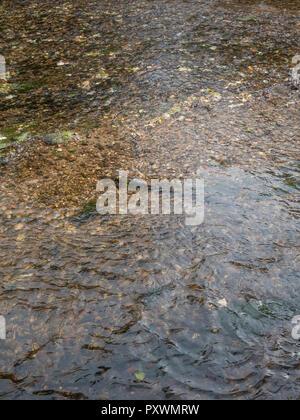 """Río poco profundo revelando el lecho del río de guijarros. Metáfora """"aguas de mar"""". Para el comercio del agua, el valor del agua, el agua como mercancía."""