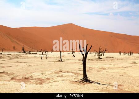 Deadvlei Namibia - paisaje desértico con árboles muertos de 8000 años en las dunas del desierto de Namib, Namib Naukluft National Park, Namibia