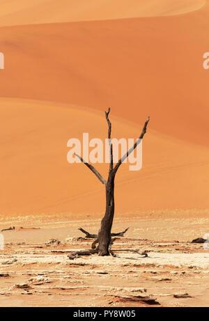 Deadvlei Namibia - los árboles muertos de 8000 años en las dunas del desierto de Namib, Namib Naukluft National Park, Namibia