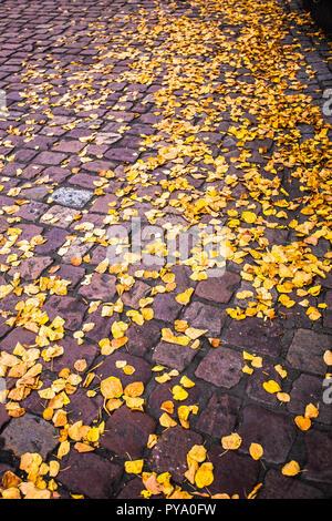 Amarillo otoño hojas caído en tierra de ladrillo