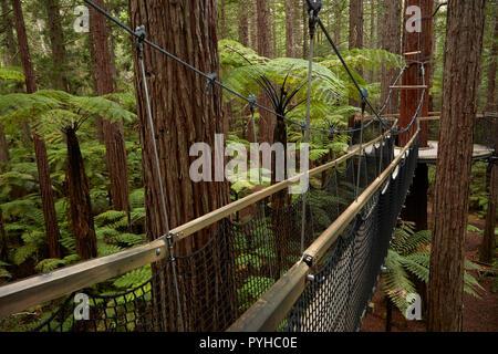 En el Treewalk secuoyas Redwoods Whakarewarewa (Bosque), Rotorua, Isla del Norte, Nueva Zelanda