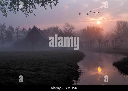 Patos volando sobre una hermosa arquitectura de casas de madera típica holandesa en el momento del amanecer reflejado en el tranquilo canal de Zaanse Schans ubicado en th