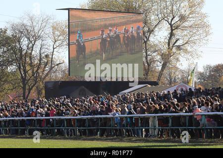 En Magdeburgo, Alemania. 31 Oct, 2018. Los espectadores viendo la última carrera de caballos en el hipódromo de este año en el Herrenkrug Park. El día de la raza de la familia atrae a miles de visitantes en tiempo soleado. Crédito: Peter Gercke/dpa-Zentralbild/ZB/dpa/Alamy Live News