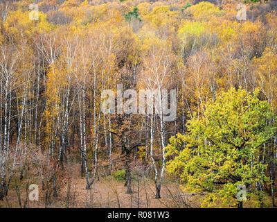 Vista anterior de glade en amarillo bosque en otoño de octubre Día