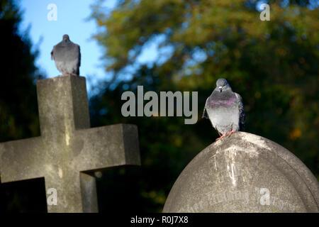 Palomas posado sobre las lápidas en el cementerio de Brompton (Kensington y Chelsea, Londres, Inglaterra, Reino Unido.