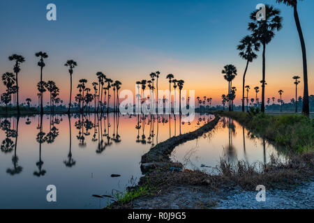 Silueta de Palmyra palm o toddy palmeras y sus reflexiones en el campo durante un hermoso amanecer temprano con coloridos sky Foto de stock