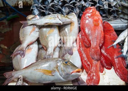 El atún y la cubera roja en la pantalla, en un tradicional mercado mojado en Nuwara Eliya, Sri Lanka.