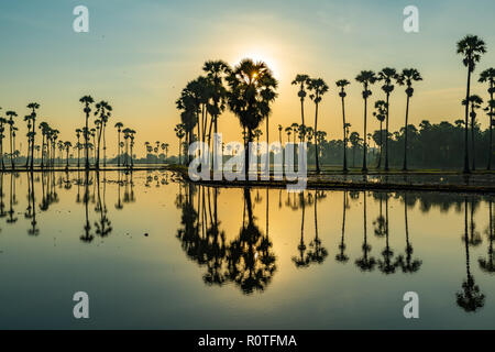 Silueta de Palmyra palm o toddy palmeras y sus reflexiones en el campo durante un hermoso amanecer temprano Foto de stock
