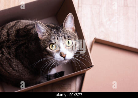Gracioso, lindo gato se asienta en una caja de cartón, mira