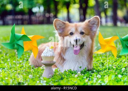 Cumpleaños fuera hermosa corgi fluffy sobre césped verde y colorida fiesta de banderas en el fondo