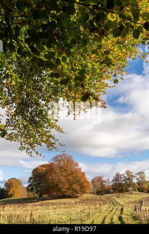 Un stand de hayedos en las zonas rurales de Aberdeenshire en otoño