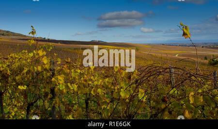 Cerca de los viñedos de color riquewihr en Alsacia en Francia