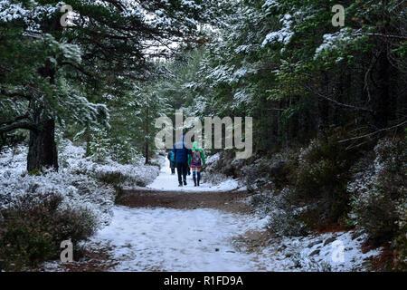 Paseo por el bosque en invierno la nieve, Rothiemurchus Estate, cerca de Aviemore, región de tierras altas, Escocia