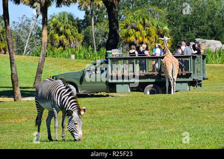 Tampa, Florida. El 25 de octubre de 2018. La gente en safari de alimentar a las jirafas. Zebra desenfocado en primer plano. En Bush Gardens Tampa Bay.