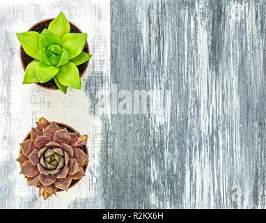 Dos pequeñas plantas suculentas sobre lienzo artístico con trazos de pincel blanco y gris, con espacio de copia.