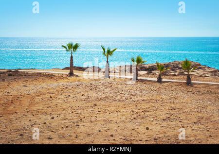 Imagen de cinco cortos palmeras en la playa estéril en el fondo del mar azul brillante superficie y cielo despejado de verano.