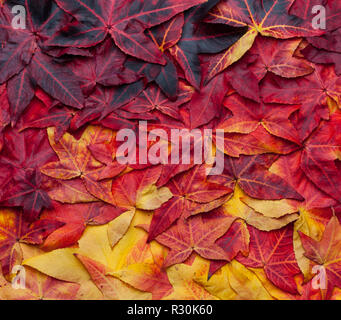 Hermoso collage fondo de hojas de otoño de amarillo a rojo oscuro