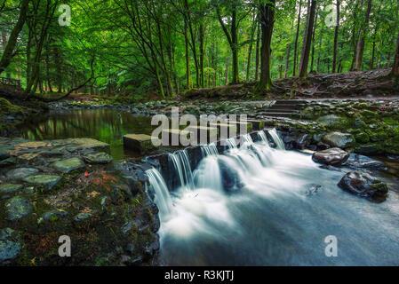 Camino de tierra en el Parque Forestal de Tollymore