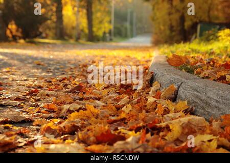 Hojas de arce en el suelo y en la calle silenciosa. Los colores de otoño, amarillo y naranja. Colorido final del verano.