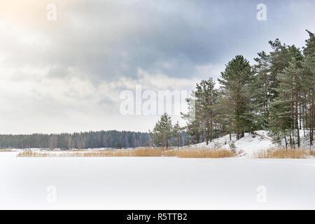 Paisaje invernal con bosque de pinos y el lago congelado. Escarcha en los pinos en frío día soleado.