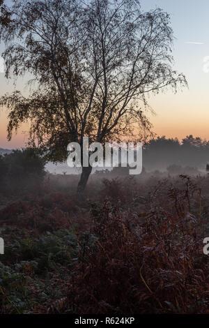 Un árbol solitario al amanecer en el parque nacional de New Forest, en Hampshire, Inglaterra, Reino Unido. Foto de stock