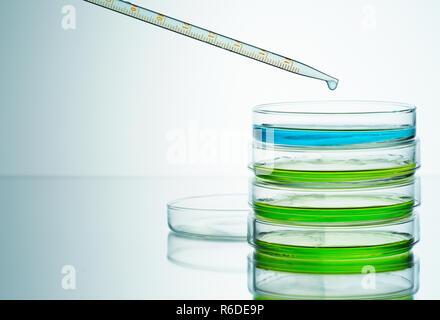 El azul y el verde líquidos en placas de petri con pipeta, fondo liso
