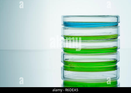 El azul y el verde líquidos en placas petri, fondo liso