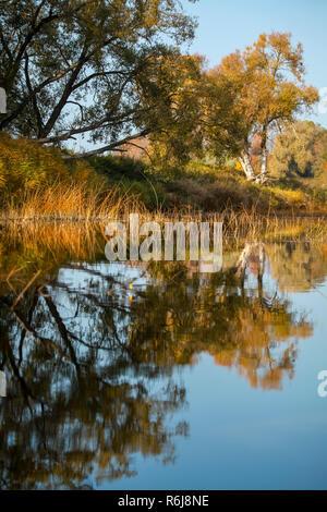 Ver el paisaje otoñal de río y árboles en día soleado. Bosque en la costa del río en el día de otoño. Reflejo de otoño los árboles en el agua. Los árboles con naranja,